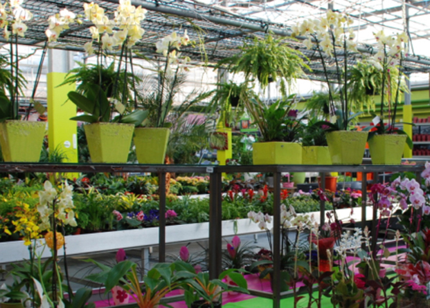 Im genes de endanea garden center for Jardineria a domicilio barcelona