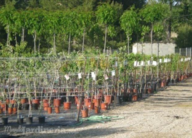 Tipos jardines calatayud for Viveros zaragoza