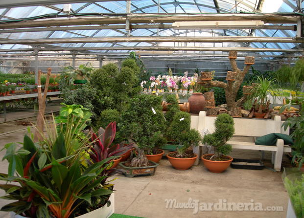 Dise o jardines alcobendas for Vivero alcobendas