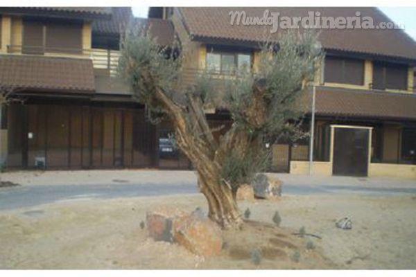 Consejos al plantar un árbol