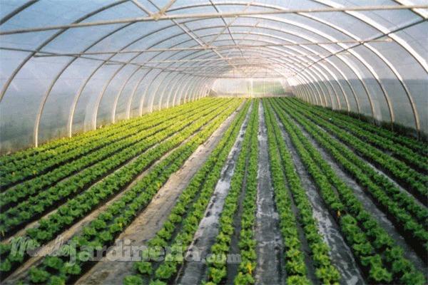 El potencial económico de los invernaderos para tu negocio