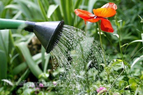 Cuidados del jardín durante el verano