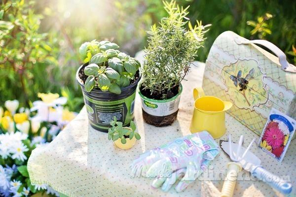 Herramientas necesarias para trasplantar tus plantas
