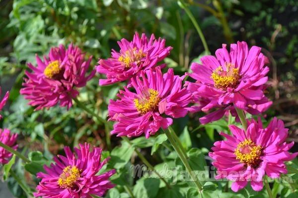 Tips para lucir el mejor jardín