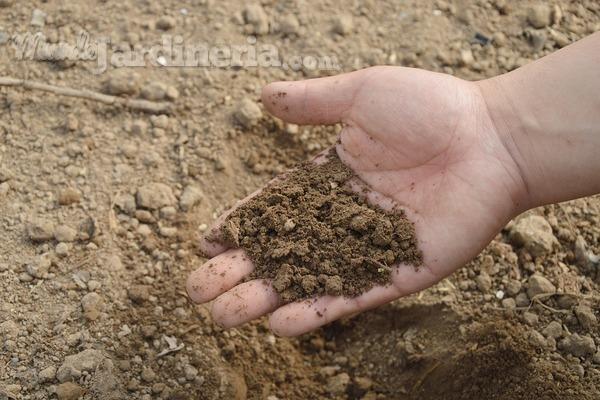 Fertilizantes o abonos: ¿hay alguna diferencia?