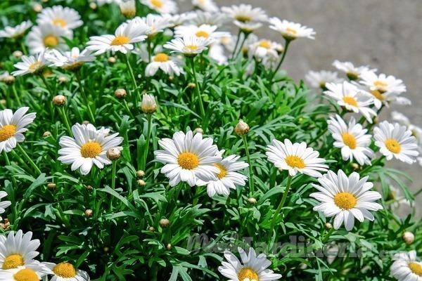 Tratamiento postsolar para nuestras plantas