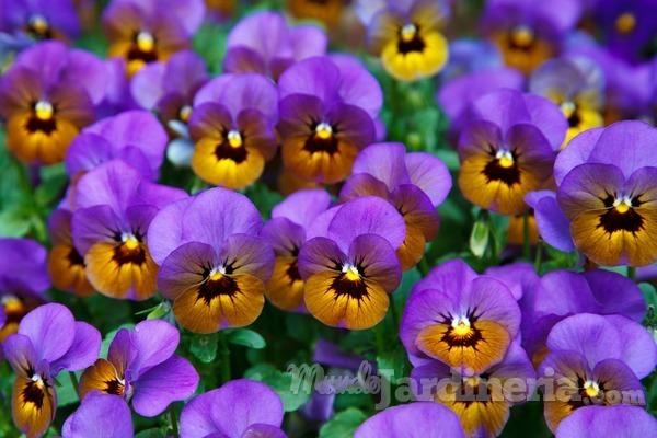 6 plantas de temporada que resisten el frío