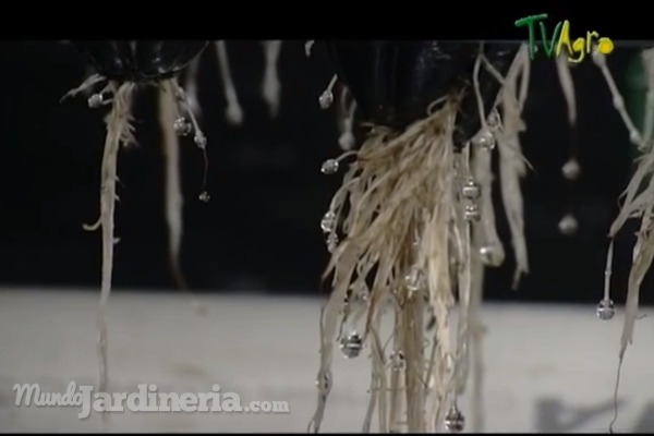 Cultivos aeropónicos, o cómo cultivar plantas en el aire