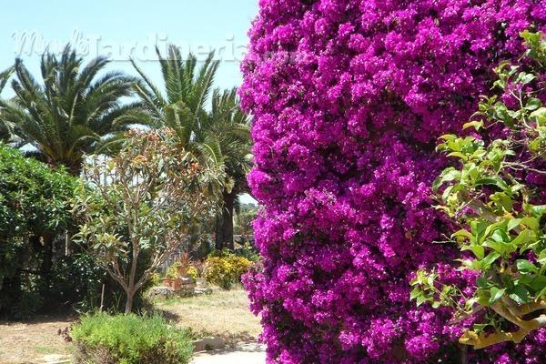 ¿Qué necesitamos para crear nuestro jardín mediterráneo?
