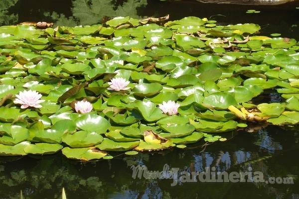 Cuando agua y plantas están en perfecta armonía: los jardines acuáticos