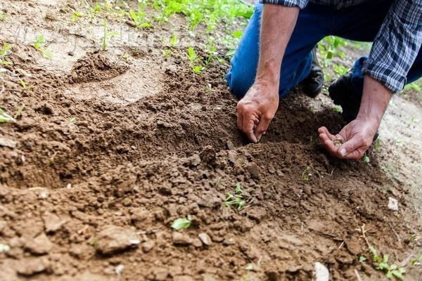 Semillas: todo lo que necesitas saber para usarlas en tu jardín