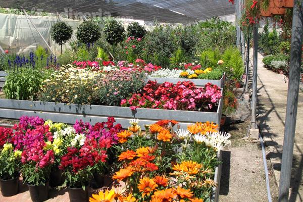 Adquiere todo lo que necesites para tu jard n en un garden - Viveros plantas madrid ...