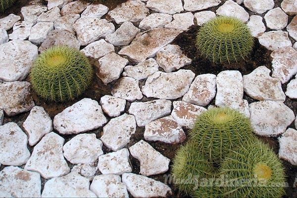 Cómo cuidar un cactus en invierno