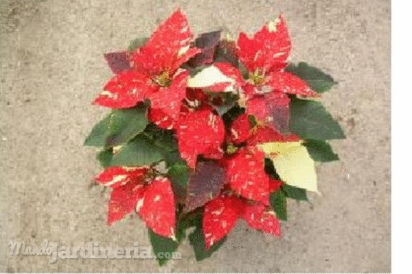 Resistencia de las plantas al fr o - Plantas de frio y calor ...