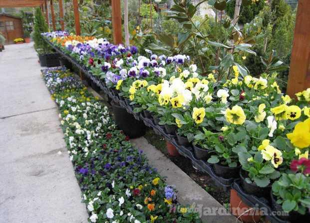 Centro de jardiner a arag n - Centros de jardineria madrid ...