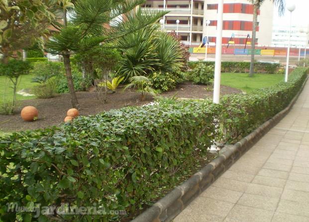 Jardines del pino - Pinos para jardin ...