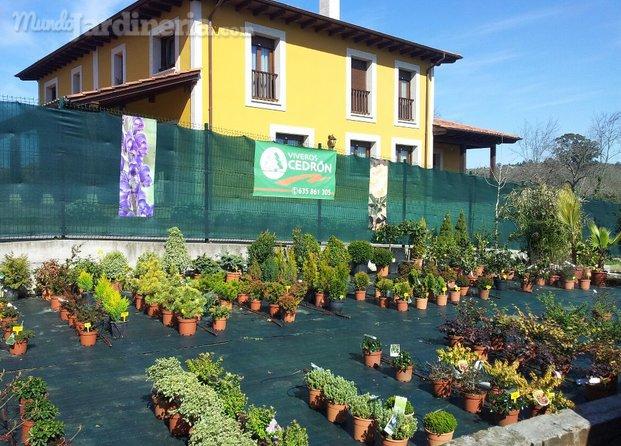Construcci n jardines asturias for Viveros en asturias