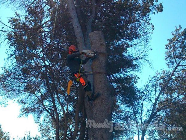 Forestal Pinedes