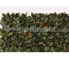 Seto Decorativo Photinia Catálogo ~ ' ' ~ project.pro_name