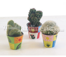 Cactus En Maceta Decorada Catálogo ~ ' ' ~ project.pro_name