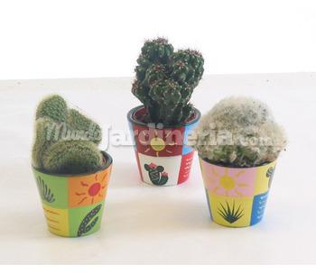Pin jardines cactus suculentas schlumbergera navidad for Cactus de navidad