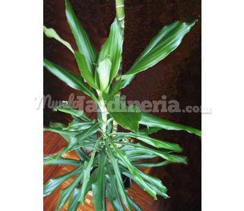 Plantas de interior madrid p gina 4 for Plantas de interior madrid