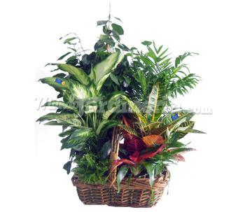 Composici n de plantas cat logo for Plantas de interior madrid